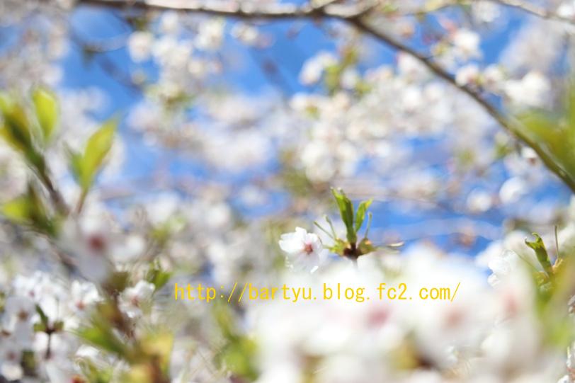 IMG_6750.jpg