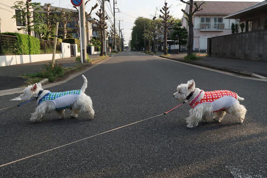 kyoukenbyouchikudekotosimogeri3.jpg