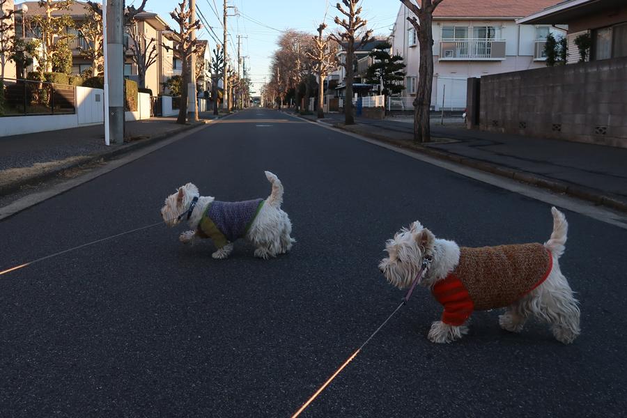 yonakaniyukigafuttarasiindaga2.jpg