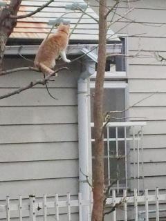 猫チャレンジ (1)
