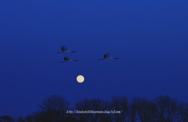 丹頂満月に飛ぶ 020-A-1
