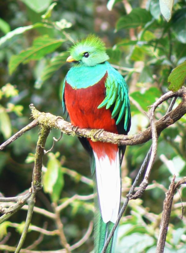 quetzal01.jpg