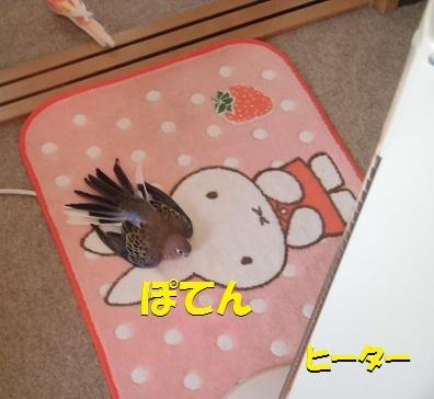 CIMG8057.jpg