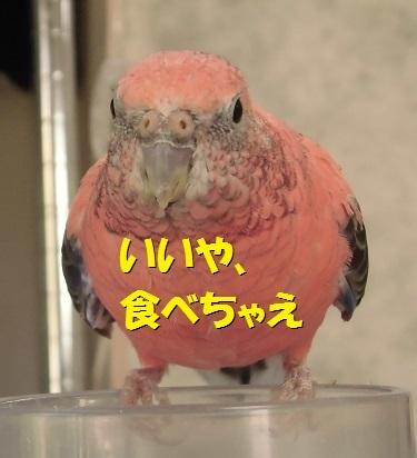 CIMG8211.jpg