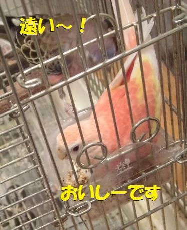 CIMG8218.jpg