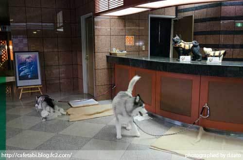 千葉県 勝浦市 犬と泊まれる宿 ホテル 里杏 口コミ じゃらん 予約 観光 館内 写真 11
