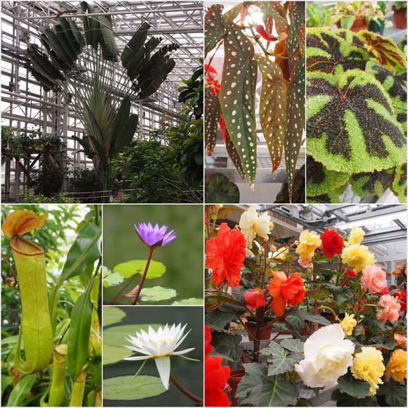 ゆうブログケロブログお花見と花まつり (30)