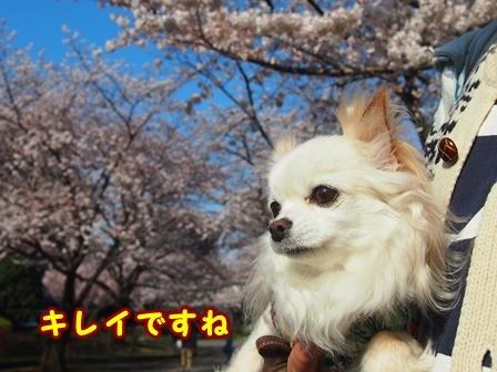 blog9327a.jpg
