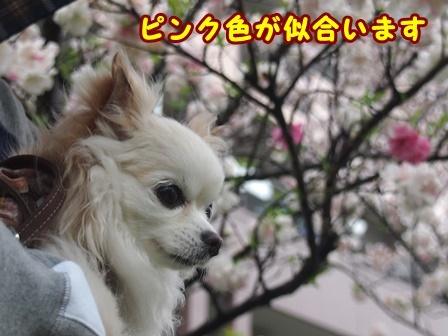 blog9363a.jpg
