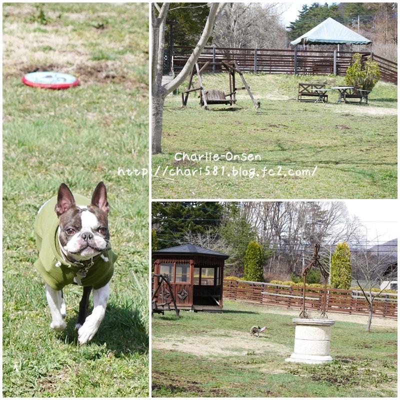 cats170415-1.jpg