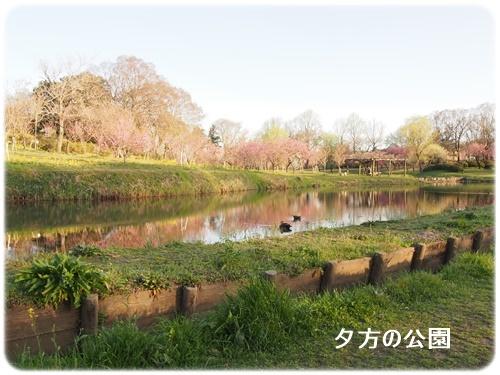 夕方の公園