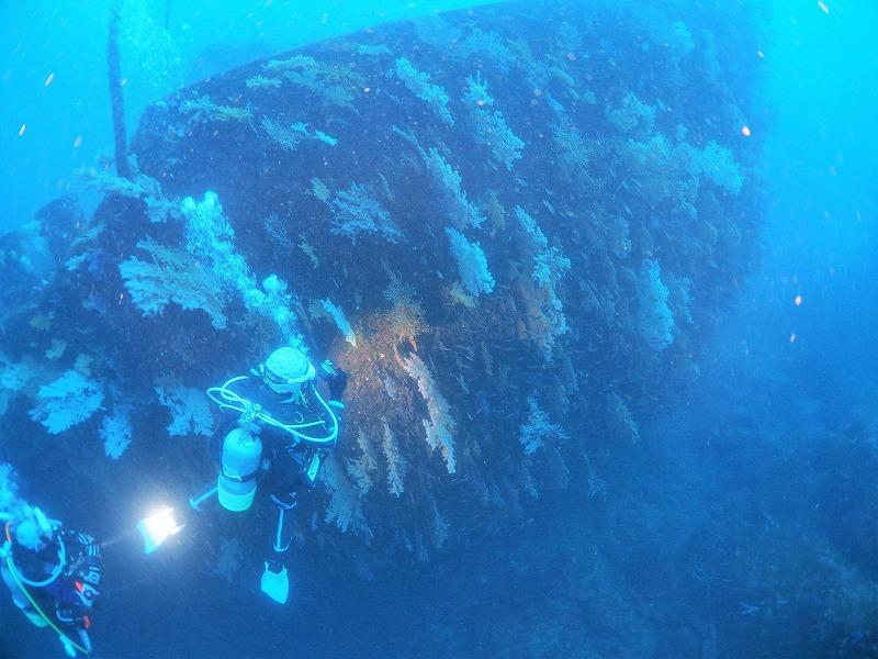 熱海沈船サンゴ