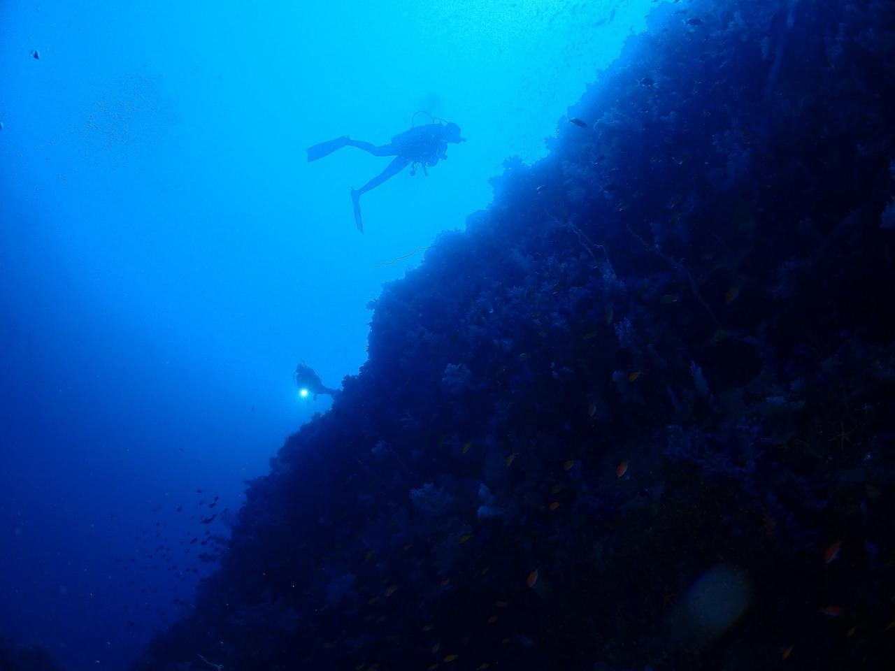 真っ青な伊豆海洋公園 (3)