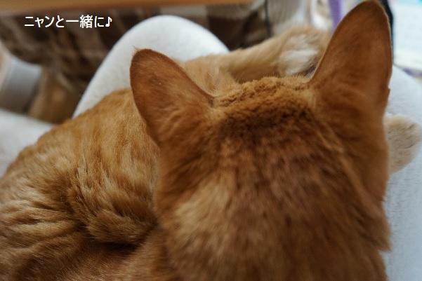 cyako416.jpg