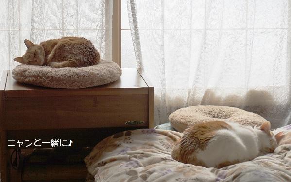 cyakomo406.jpg