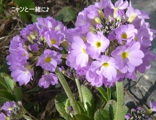 tamazaki2014.jpg