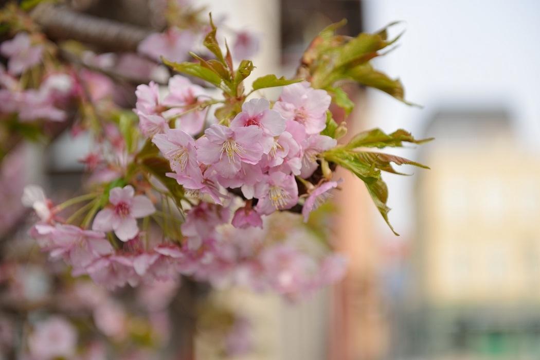 春近し その2