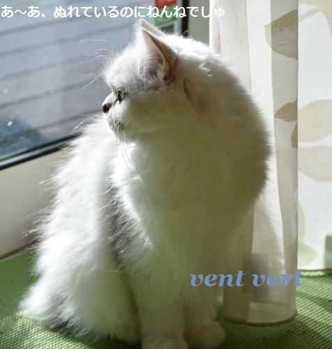 20170321064802c8e.jpg