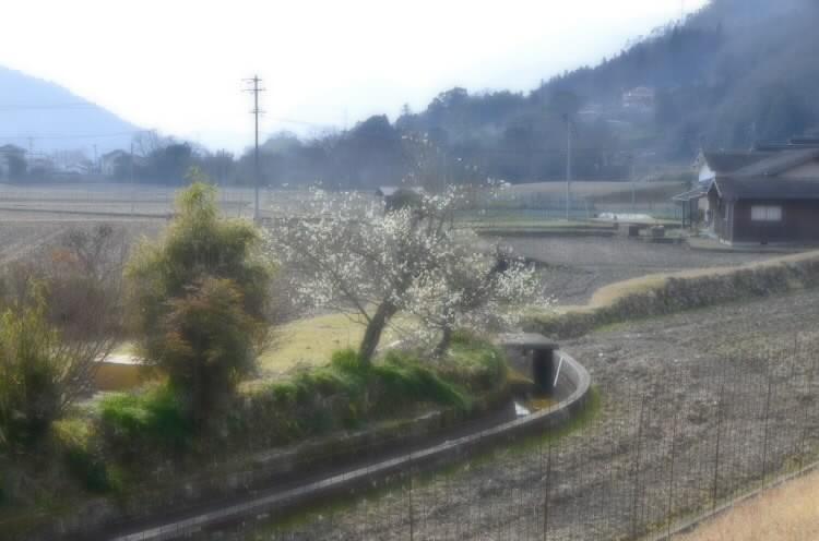 170306satoyamanoharu003.jpg