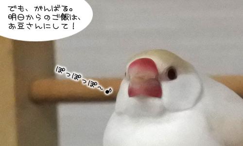 ピノしゃんの秘密_4
