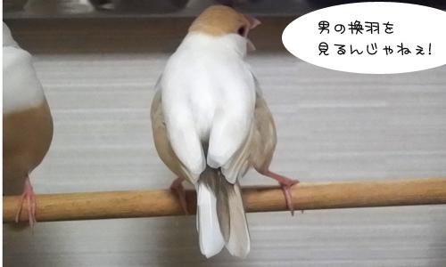 ラスボスの一声&ニューモード尾羽_3