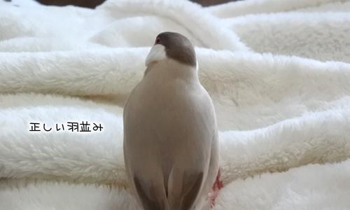 おちょぼくちばしと羽ボッサボサ_3