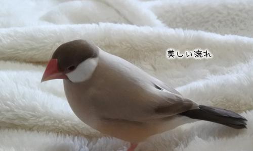 おちょぼくちばしと羽ボッサボサ_4
