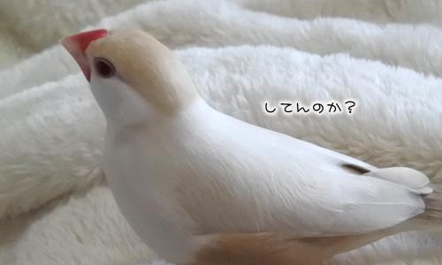 おちょぼくちばしと羽ボッサボサ_6