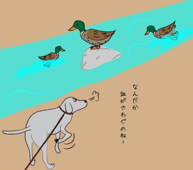 鴨とラブラドール