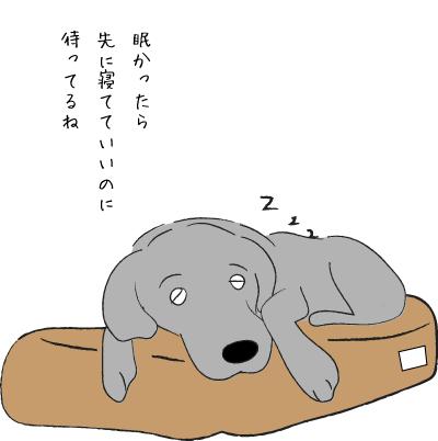 居眠りラブラドール