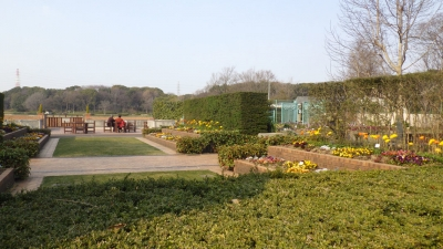 大泉緑地 ふれあいの庭(その1:2017年3月撮影)