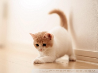 playing_kitten-wallpaper-320x240.jpg