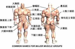 Body_muscles (1)