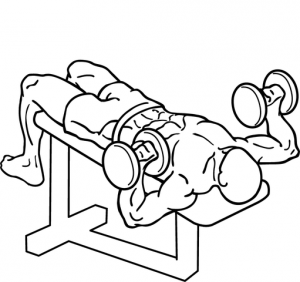 511px-Decline-dumbbell-bench-press-2.png