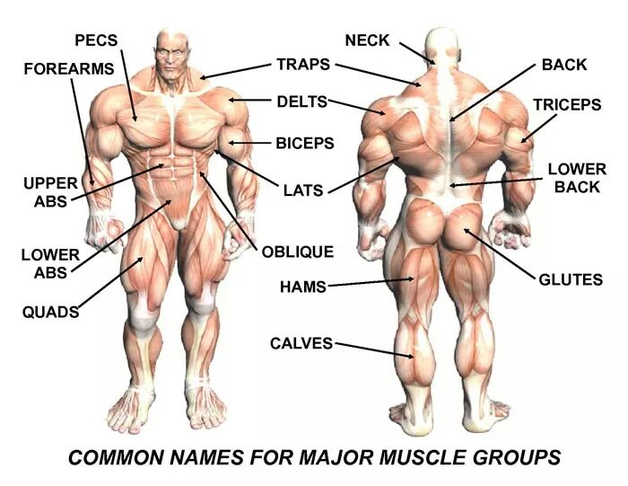 Body_muscles_20170306090735133.jpg
