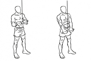 Triceps-pushdown-1-horz.jpg