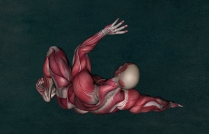 anatomy-2148324_960_720.jpg