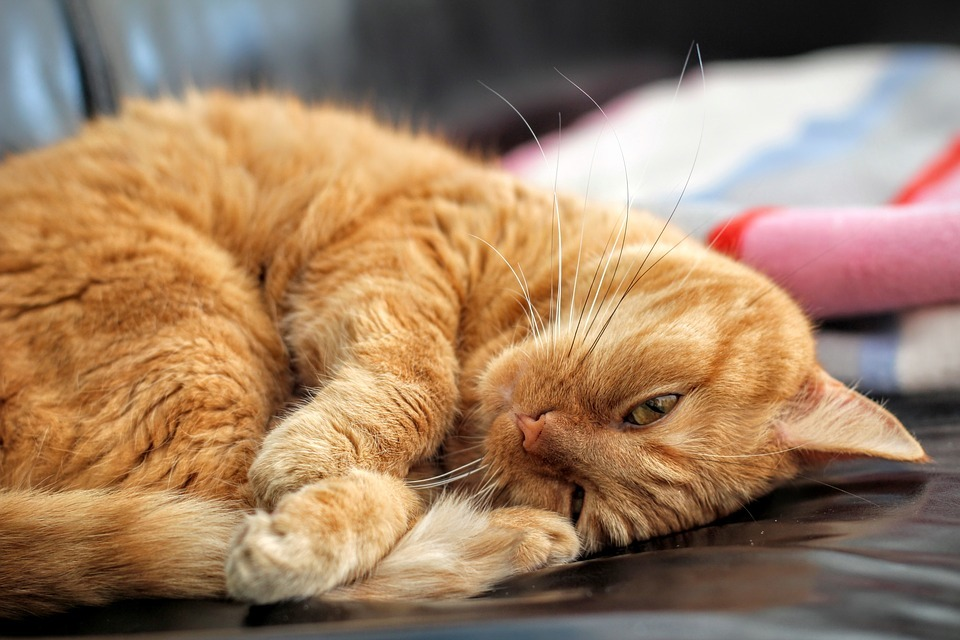cat-1660967_960_720.jpg