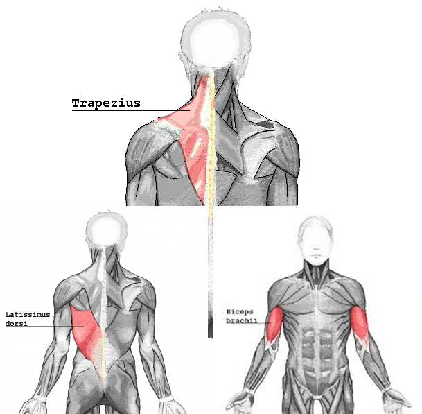 pullmuscle_20170424192939b2a.png