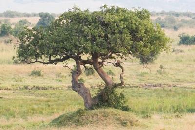 wisdomtree-etf.jpg