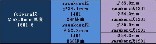 yuipapa1601-6.jpg