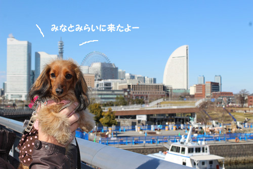 2017-2-yokohama6.jpg