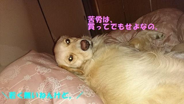 DSC_1022.jpg