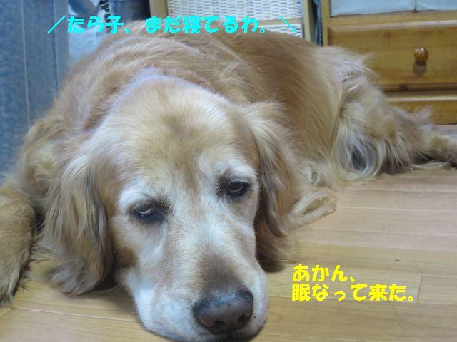IMG_0013_20170326195607d35.jpg