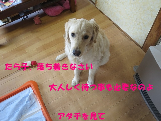 IMG_0107_201703292258374eb.jpg