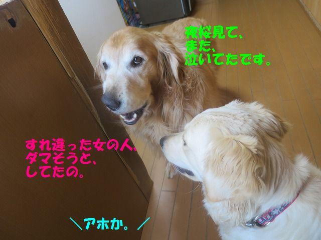 IMG_0504_20170410201939468.jpg