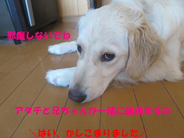 IMG_0544.jpg