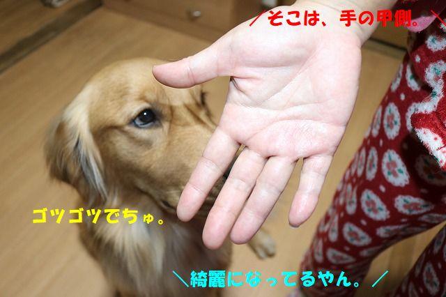 IMG_4309.jpg