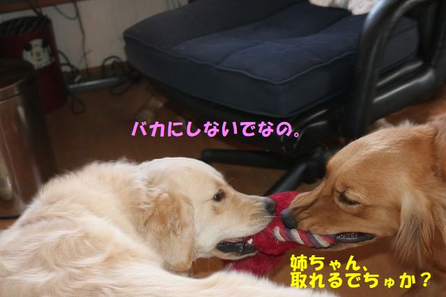 IMG_4394.jpg