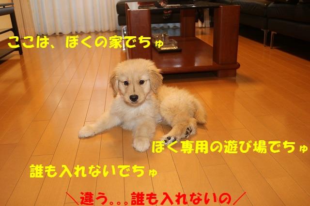 IMG_5561.jpg